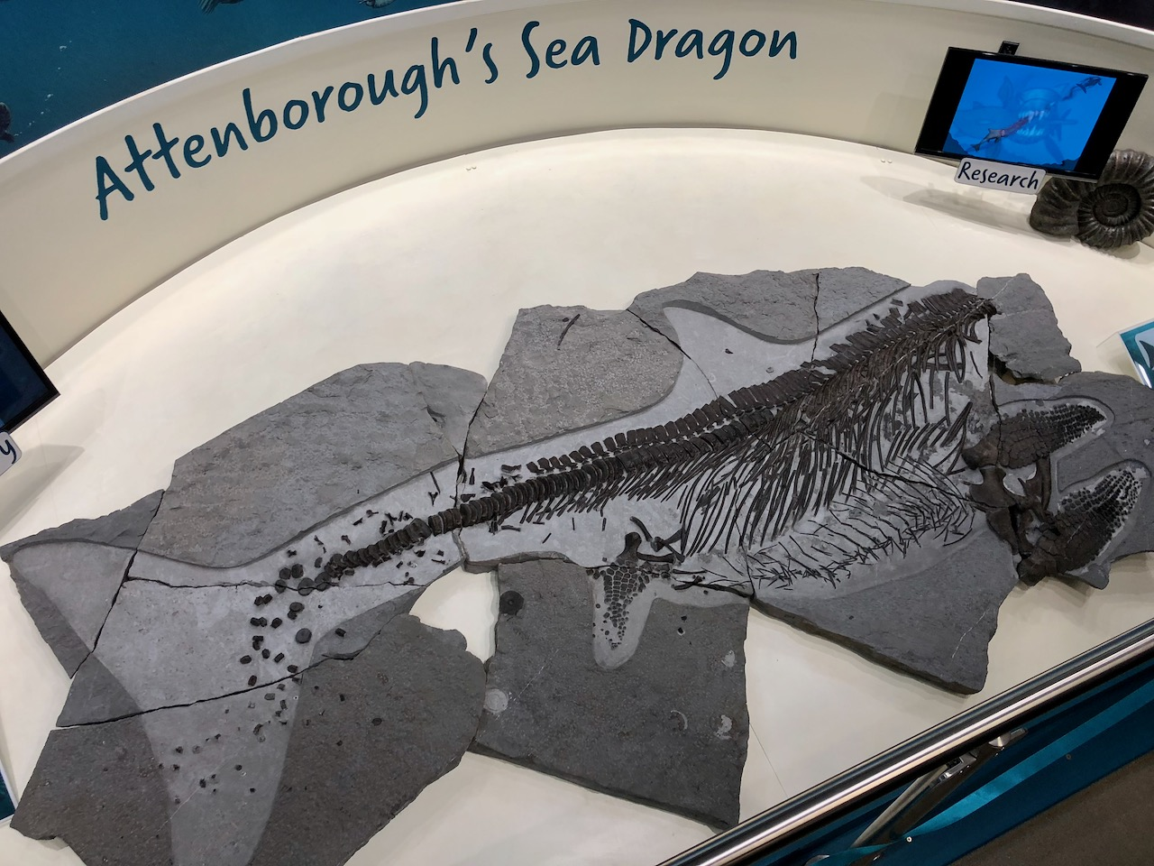 Attenborough's Sea Dragon