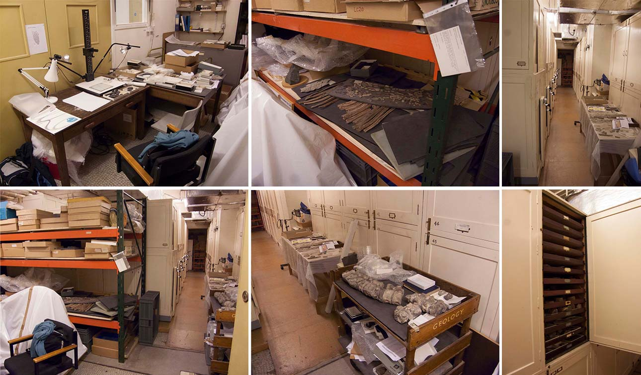 Leicester New Walk Museum collections