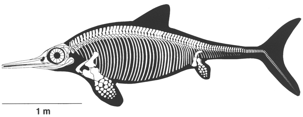 Ophthalmosaurus from Sander (2000)